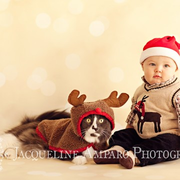 Baby Christmas Portraits